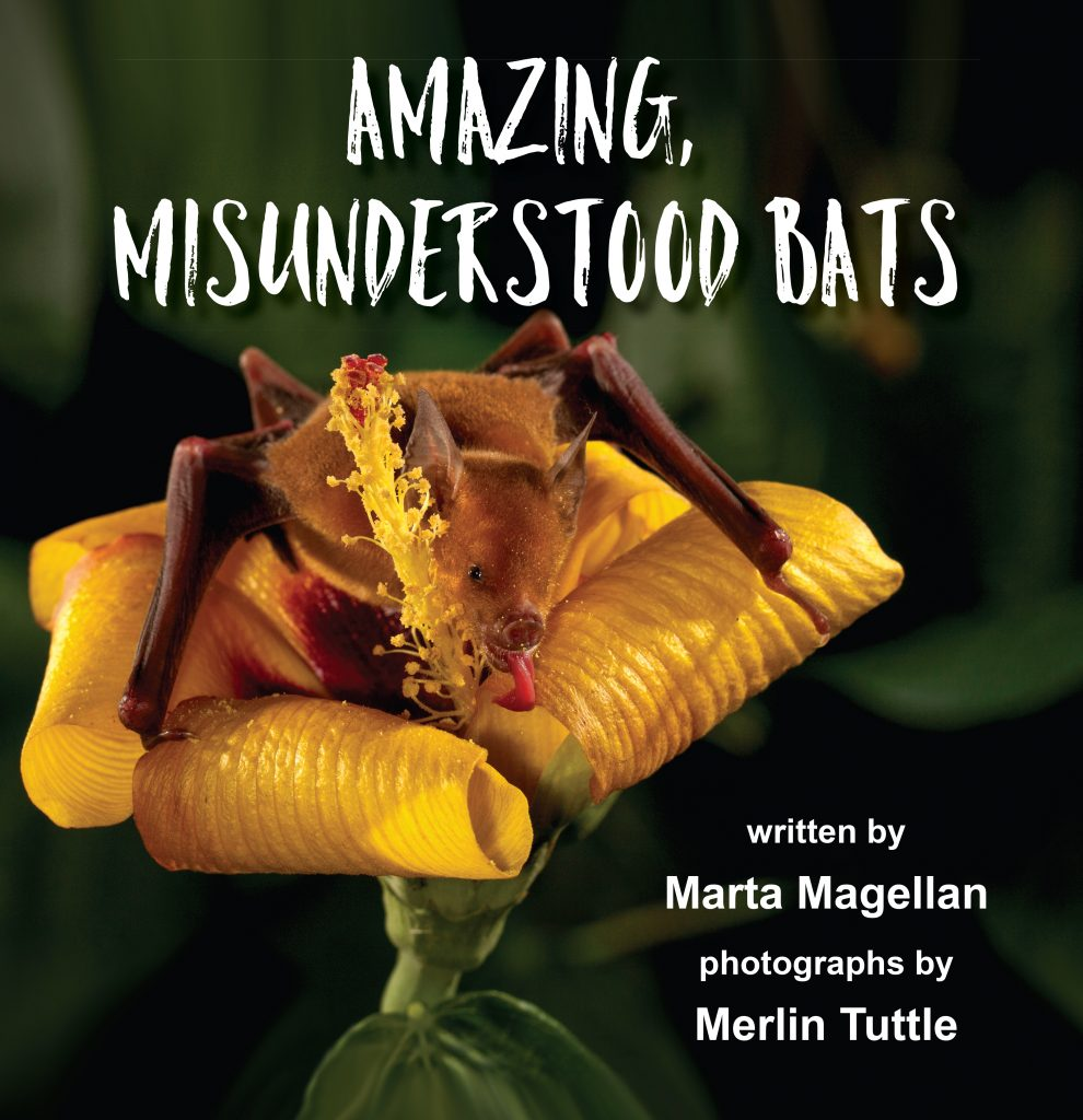 Amazing Misunderstood Bats, new cover